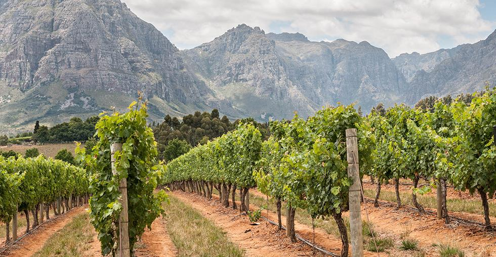 Live the dream: buy a South African vineyard