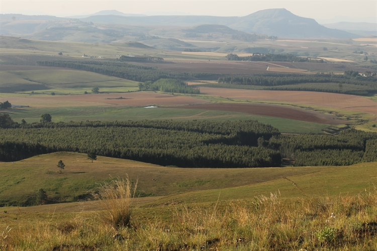 guest farm drakensberg with - 13