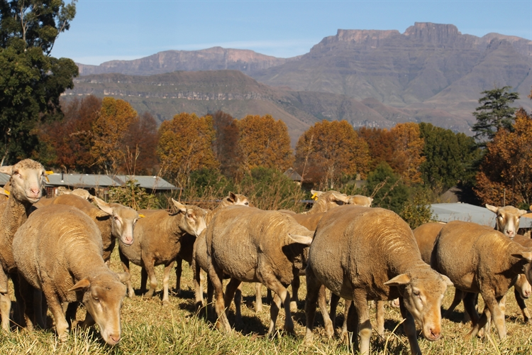 guest farm drakensberg with - 12