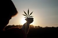cbd cannabis growing accessories - 1