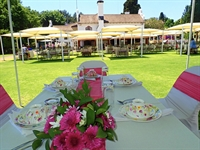 profitable popular tea garden - 3