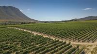 boutique wine farm hermanus - 3