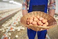 modern egg producing business - 1