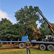 commercial tree cultivation business - 1