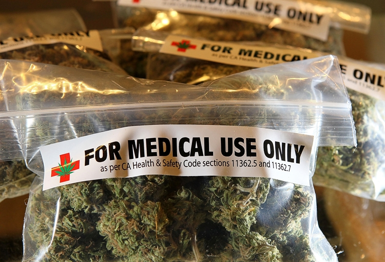 cannabis cultivation medical licenses - 2