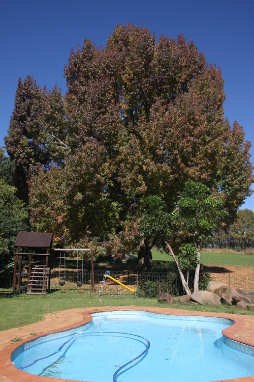 guest farm drakensberg with - 14