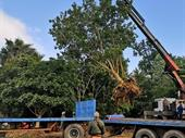 commercial tree cultivation business